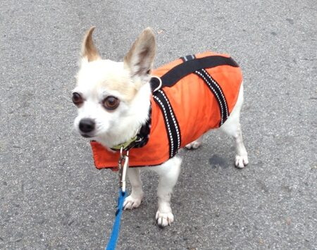 water resistant dog vest