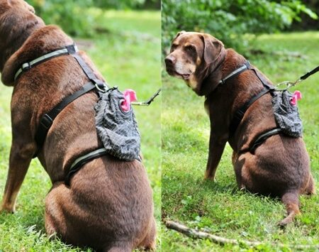 Poo Doo Pouch Harness